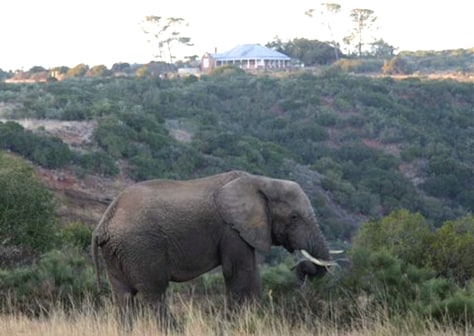 IMAGE: ELEPHANT ON FORMER FARM