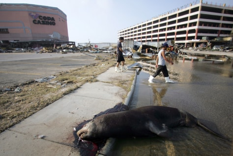 Hurricane a capricious visitor to cultural sites ...