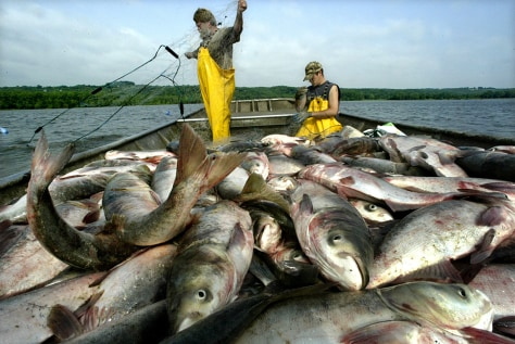 IMAGE: BLACK ASIAN CARP