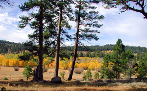 IMAGE: FREMONT NATIONAL FOREST