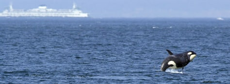 IMAGE: ORCA OFF SEATTLE