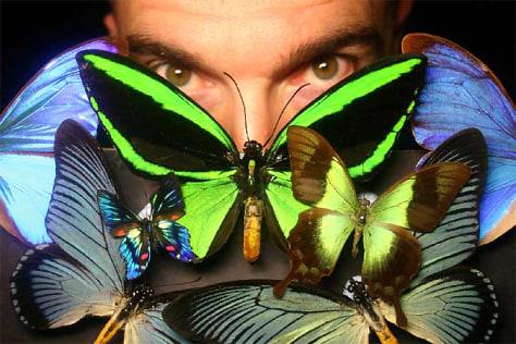 Researcher and butterflies