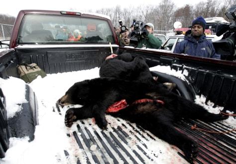 Image: Black bears