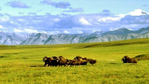 Image: Arctic National Wildlife Refuge
