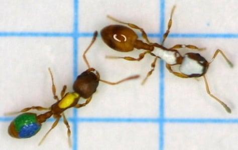 Image: Ants
