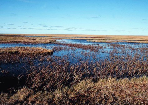 IMAGE: WETLANDS ON LAKE TESHEKPUK