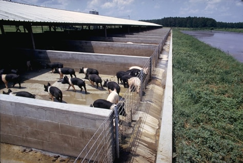 IMAGE: HOG FARM AND LAGOON