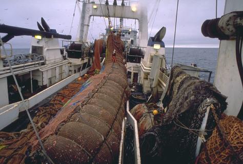 IMAGE: FISH HAULED ABOARD SHIP