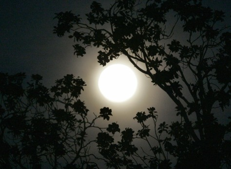 Image: Full moon