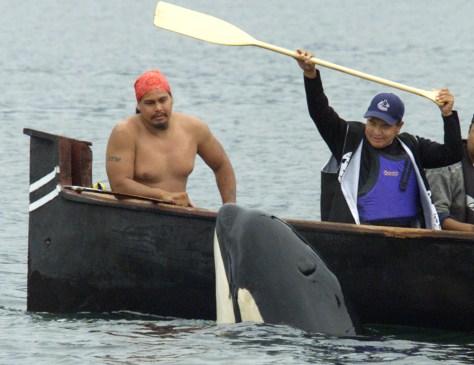 IMAGE: ORPHANED ORCA