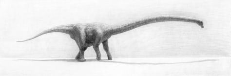 long-necked dinosaur drawing