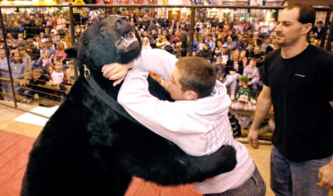 IMAGE: Bear wrestler