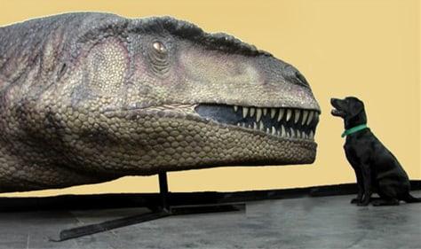 dog sits next to dinosaur head replica