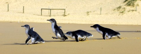 IMAGE: FOUR TINY PENGUINS