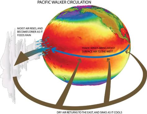 illustration of Walker circulation