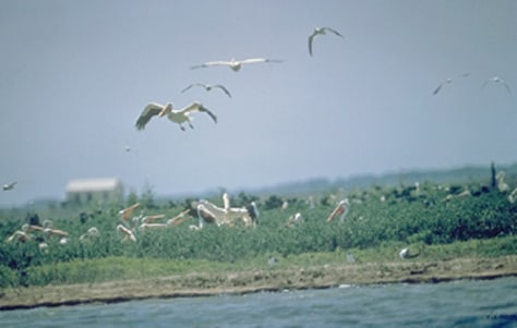 IMAGE: BIRDS AT TEXAS SEASHORE