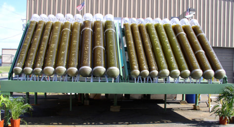 IMAGE: ALGAE IN TUBES