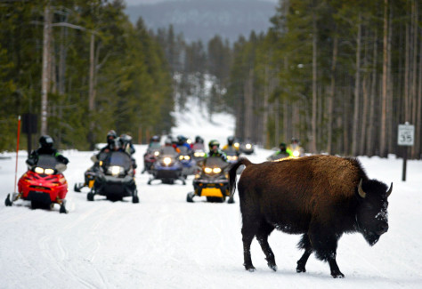 Image: Snowmobilers in Yellowstone