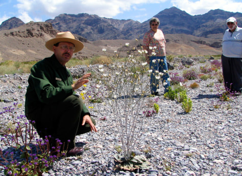 IMAGE: DEATH VALLEY NATIONAL PARK RANGER SHOWS FLOWERS