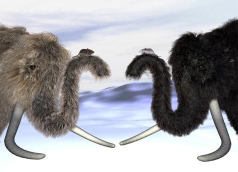Image: Mammoths