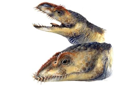 Image: Umoonasaurus
