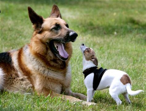 IMAGE: Brutus (left) and Midge