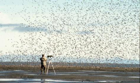 Image: Biologist, birds
