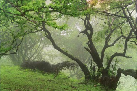Image: Cloud forest