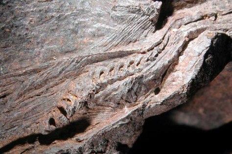 Image: Ichthyosaur fossil