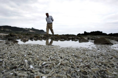 IMAGE: DEAD ANCHOVIES