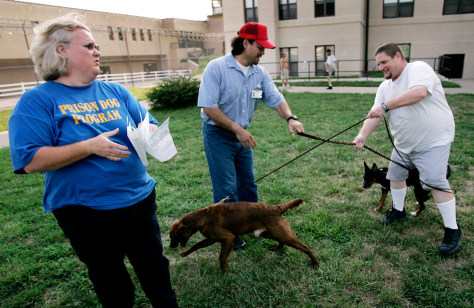 Prisoners rehabilitate death-row dogs - Health - Pet health