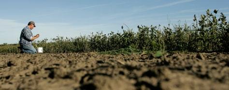 IMAGE: FARMER IN SOYBEAN FIELD