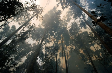 IMAGE: HAZE IN FOREST