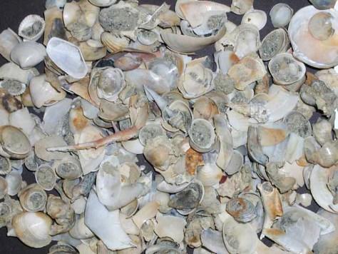 Image: Marine mollusks