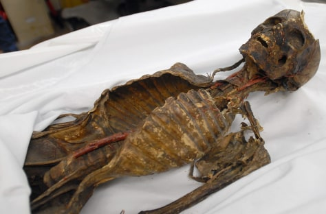 Image: Mummy in Michigan