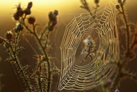 Image: Spider web