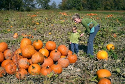 Pumpkins -- Boo!