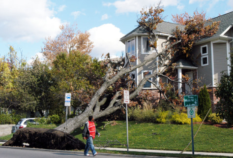 IMAGE: Uprooted tree on house