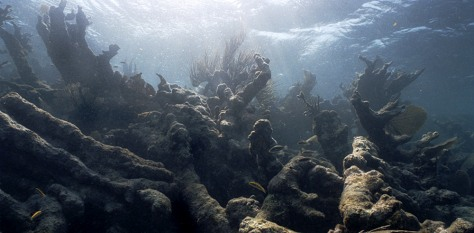 IMAGE: BLEACHED REEF IN BELIZE