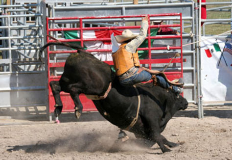 Image: Bull riding