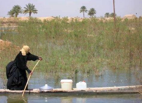 Image: Iraqi marshland