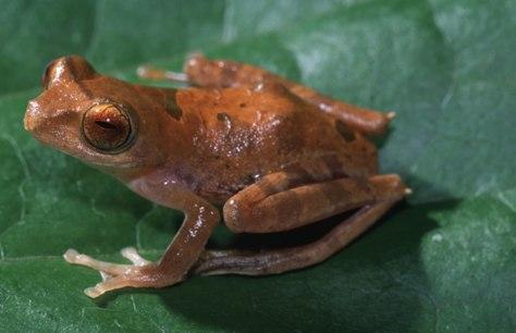 Image: Tree frog
