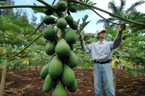 Image: Papaya farmer