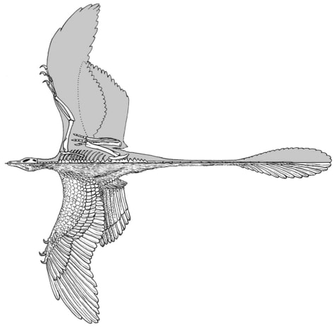 Image: Microraptor gui