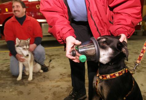 Image: Dog oxygen mask