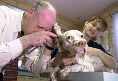 Image: Vet, puppy, assistant
