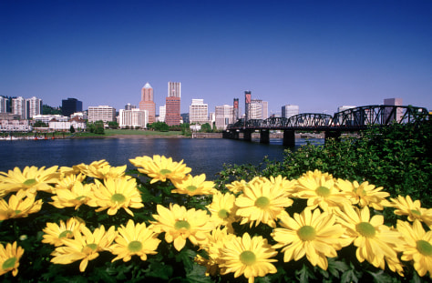 Image: Chrysanthemums in Portland
