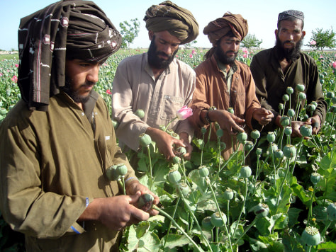Image result for taliban opium
