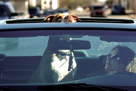 Image: Pet riding shotgun