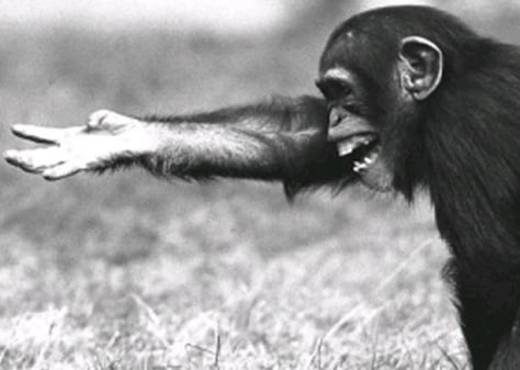 Image: Chimp gesture